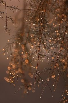 Tree sparkles