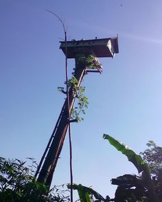 The traditional dovecote of East Java, Indonesia #dovecote #pigeonhouse #بيت_الحمام #برج_الحمام