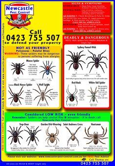 spider chart | Spider Identification Chart