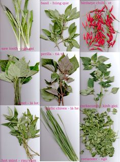 Basic Vietnamese Herbs In My Kitchen (& Chilli) | Uyen Luu