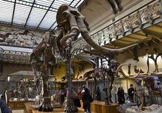 palontologie. Jardin des Plantes