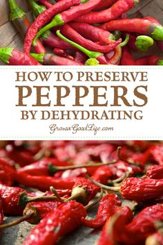 How to Preserve Peppers by Dehydrating: Turn that pepper harvest into jars of dried peppers that can be ground into chili powder or rehydrated and used in sauces, soups, stews, and chilies. Visit to learn three ways to dehydrate peppers. Dehydrated Vegetables, Canning Vegetables, Dehydrated Food, Veggies, Dried Peppers, Red Chili Peppers, Recipe With Chili Peppers, Hot Pepper Recipes, Hot Sauce Recipes