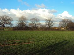 Through the fields near Bearwood forest
