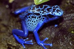 Blue Poison Arrow Frog. The Most Dangerous Species On Earth Indeed, there are many ferocious creatures, both large and small, that are downright deadly. Here aresome of the deadliest speciesin the world. You won't believe the reason why some made it to this list!
