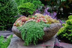 Helpful+Advice+And+Killer+Combos+For+Your+Hypertufa+Containers   In this container I used a dwarf a mini hinoki cypress, sempervivums, sedum and thyme.