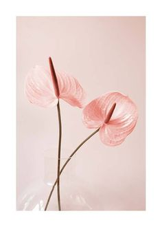 Here you will find floral prints and posters. Stylish posters with botanical prints of colorful plants. Buy botanical posters online from Desenio. Design Floral, Colorful Plants, Fruit Art, Botanical Prints, Love Flowers, Flower Tattoos, Flower Art, Floral Wedding, Flower Power