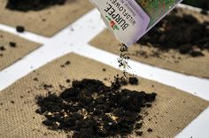 DIY flower seed pockets-perfect spring craft!