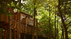 Choose a lodge, apartment or hotel room nestled in stunning forest. Book a lodge holiday or break to Center Parcs Forest Book, Normal House, Broken Families, Sherwood Forest, Closer To Nature, In The Tree, Open Plan Living, Lodges, Woodland
