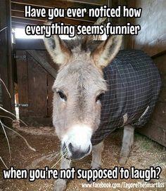Animal Captions, Cute Animal Memes, Funny Animal Pictures, Cute Funny Animals, Donkey Funny, Donkey Donkey, Cute Donkey, Smiling Animals, Rare Animals
