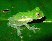 Ever seen it rain frogs? Saw it once with my mom. Awesome that frogs fell from the sky Awesome that me and my mom laughed at the frog rain till it hurt our sides. ((When you see something that is amazing its wonderful to have someone you love see it with you))