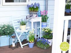 Small garden? Large balcony? Colour-blind? Let us help you find some inspiration.