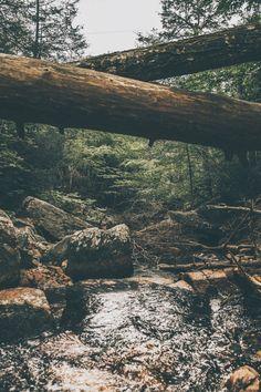 New photography nature wanderlust woods Ideas Landscape Photography, Nature Photography, Travel Photography, Photography Women, Misty Forest, Forest River, Photo D Art, Belle Photo, Beautiful Landscapes