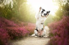 Photo Paws up! by Alicja Zmyslowska on 500px