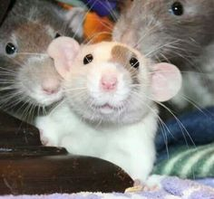 photo bomb.....but oh so cute !                                                                                                                                                                                 More
