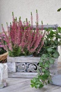 "Skrzynka ""Provence"" I 48,00 zł Future, Plants, Future Tense, Plant, Planting, Planets"