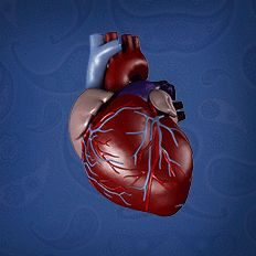 انفوجرافيك أطعمة تخفض ضغط الدم The Cure Outdoor Decor Health Care