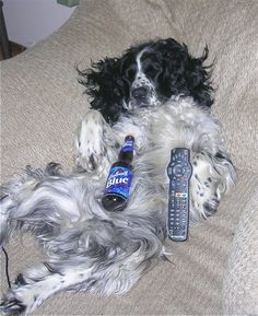 funny springer spaniel pictures | The Doggie Comics: Funny Dog Pictures