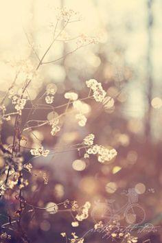 winter flowers in sunlight