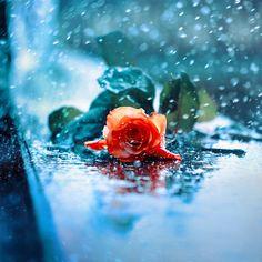 rain... by kokoszkaa.deviantart.com on @deviantART
