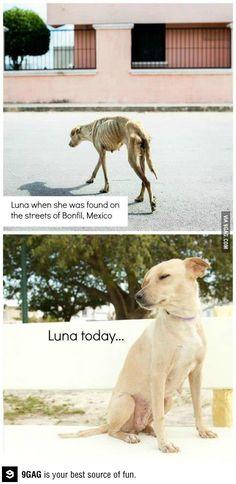 Saving one dog won't change the world, but it will surely change the world for that one dog.