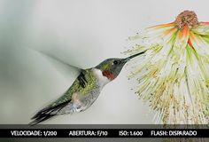 Dicas Para Fotografar Aves