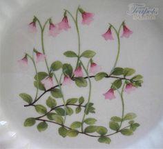 Linnea flower(twinflower) - found in the north woods of Sweden