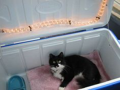 Heating an Outdoor Cat Enclosure in the Winter with rope lights. Use an insulated cooler for cat house.