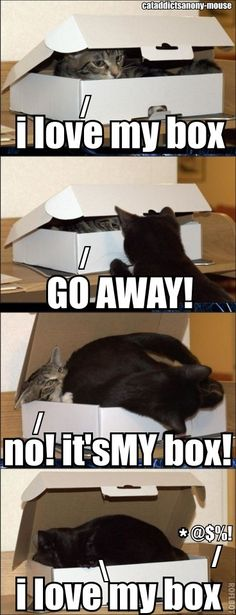 This Cat Addicts Anony-mouse cracks me up