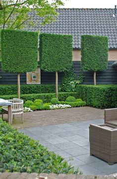 Garden Screening Ideas - Screening can be both attractive as well as functional. From a well-placed plant to upkeep complimentary fence, right here are some innovative garden screening ideas. Hedges Landscaping, Landscaping Images, Backyard Landscaping, Garden Privacy, Garden Trellis, Back Gardens, Outdoor Gardens, Outdoor Rooms, Duranta