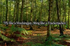 fly like a mockingjay, sting like a trackerjacker