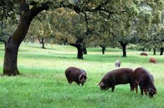 Is Pork Bad for You? Not if you choose pastured pork prepared properly.
