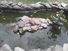 Wasser Ansaugfilter Filter aus Kunststoff für See Teich Bach Zisterne NEU