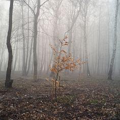 Forest near Baltic sea by Anton Novoselov, via Flickr