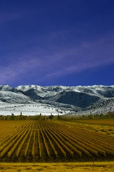 Mendoza in Argentina is probably one of the most awe inspiring places on the planet. From wine tours to some of the most incredible skiing on the planet, there is something for everyone! #Mendoza