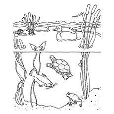 Free Pond Habitat Color Pages Google Search Steam Stem