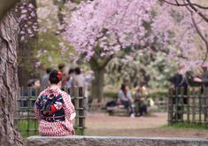 A Japanese woman in a kimono sits on a stone bench with pink cherry blossoms all around, during the sakura season in Kyoto Japan