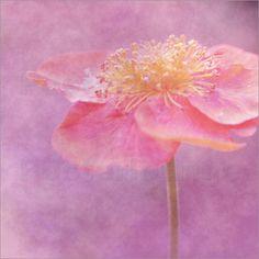 Poster Harmonie in pink - © Christine Bässler - Bildnr. 145178