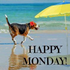 Happy Monday dog