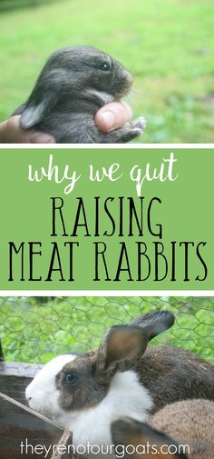 There are great benefits to raising meat rabbits, but they just weren't a good fit for our family. Find out why we decided to sell off our bunnies.