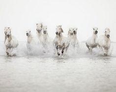 Caballos blancos by Stephmodo