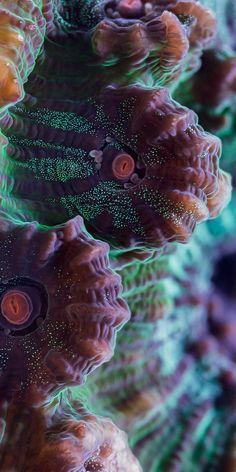 Color, Pattern, Texture  | Micro World Photography, Bioquest Studio (Chalice coral)