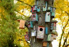Fabrique un bel abri pour les oiseaux
