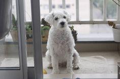 Como fazer os cães viverem mais