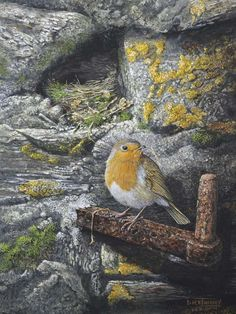 """""""The Nest Builder - Robin at Home"""" by Dick Twinney of Cornwall, UK, lover of nature & talented, self-taught artist, b.1943"""
