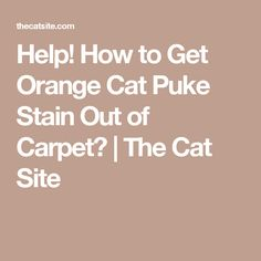 Help! How to Get Orange Cat Puke Stain Out of Carpet? | The Cat Site