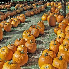 Top October Events Around Town