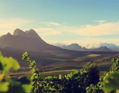 Warwick Wine Estate is a serious winery, producing award winning wine and gourmet picnics and tapas. We are and passionate about service excellence and are based in Stellenbosch Winelands region, South Africa. Vineyard, Africa, Wine, Adventure, Travel, Outdoor, Outdoors, Viajes, Traveling