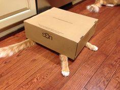 Box kitty!