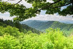 Gorgeous view of the Great Smoky Mountains.