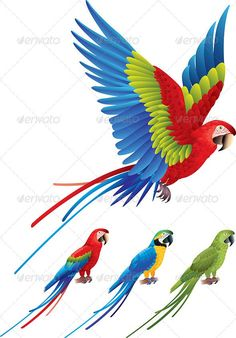 Macaw Parrot Spread Wings and Tree Sitting Aras - Animals Characters